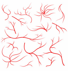 eye veins human eye vessels blood arteries set vector image