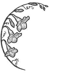 Flowers arc campanula sketch scratch board vector