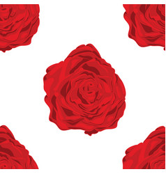 pattern of red roses in white background vector image