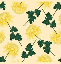yellow chrysanthemum flower on beige ivory vector image
