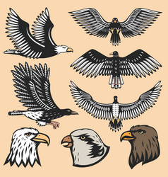 eagle bird cartoon flying animal silhouette vector image