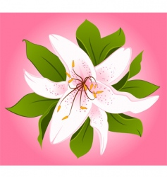 lily2 vector image vector image