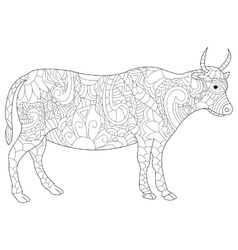 Cow coloring for adults vector image