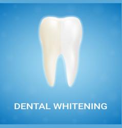 dental veneer teeth whitening whitening vector image