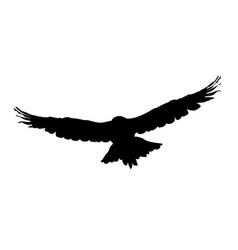 Hawk eagle falcon or orel black silhouette vector