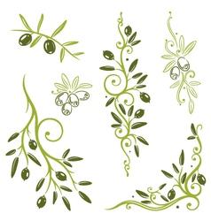 Olive vegetable vector image