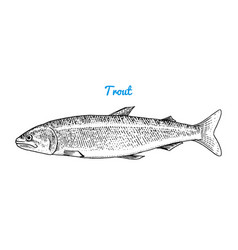 river trout and lake fish sea creatures vector image