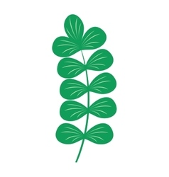 Seaweed leaf vector image