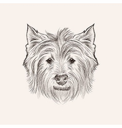Sketchwest highland terrier Hand drawn illstration vector