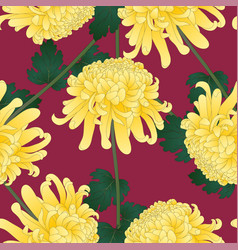 Yellow chrysanthemum flower on violet background vector