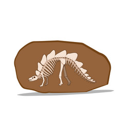 bone of stegosauras in clay fossil vector image