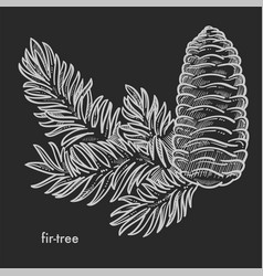 fir tree branch with cone and needle leaves hand vector image
