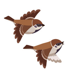 flying two tree sparrows isolated on white vector image