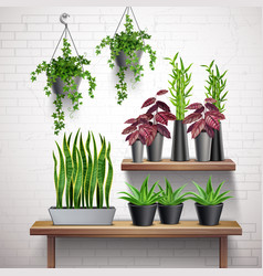 house plants realistic interior vector image