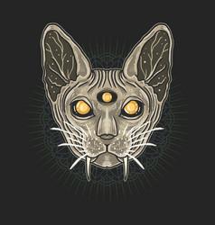 sphynx cat egypt ornament background vector image