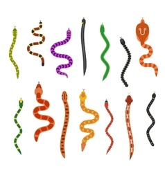 flat snakes collection isolated on white vector image vector image