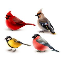 winter birds set vector image