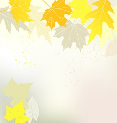 Autumn background Yellow leaves vector image