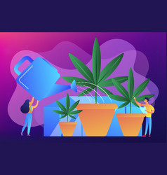 Cannabis cultivation concept vector