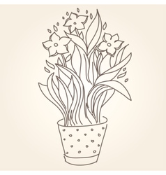 Drawing of beautiful narcissus flower in the pot vector image