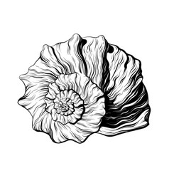 Hand drawn seashell isolated vector