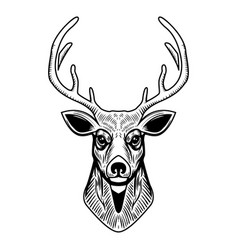 deer head isolated on white background design vector image vector image