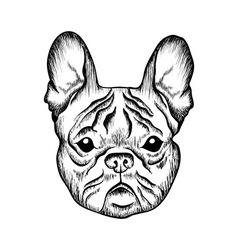 Sketch French bulldog Hand drawn vector image vector image