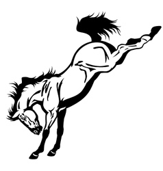 bucking horse black white vector image vector image