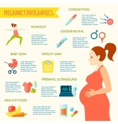 pregnancy infographic set vector image