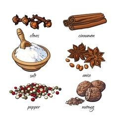 Set of spices - cinnamon pepper anise nutmeg vector
