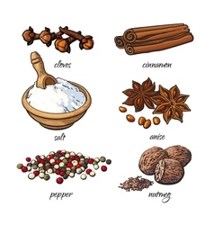 Set spices - cinnamon pepper anise nutmeg vector