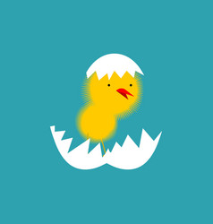 Chick and shell egg isolated small chicken little vector