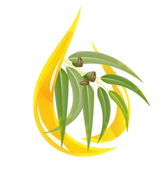 eucalipt oil vector image vector image