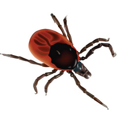 greedy tick vector image
