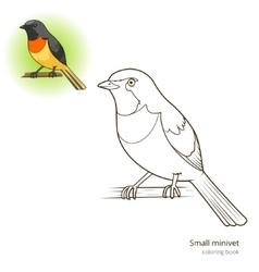 Small minivet bird coloring book vector