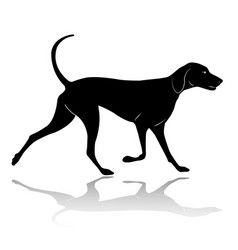 Hunting dog walking silhouette vector