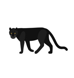 black panther isolated on white background vector image