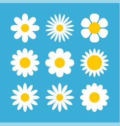 daisy chamomile flower shape vector image