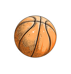 Drawing basketball ball in color vector