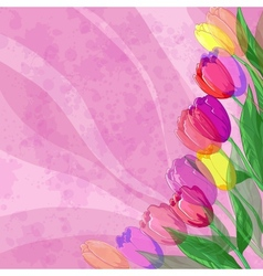Flowers tulips on pink background vector image