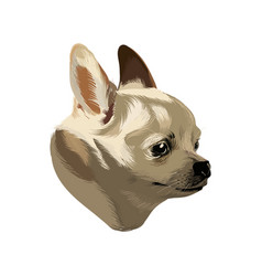 Hand drawn chihuahua isolated vector