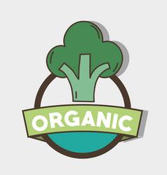Fresh broccoli organ vegetable symbol vector