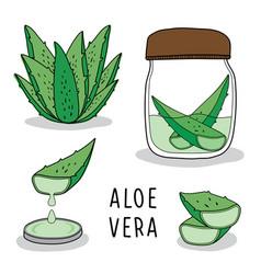aloe vera soap hand drawn vector image