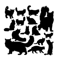 Maine coon cat animal silhouettes vector