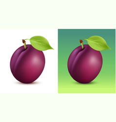 plum on white and green vector image