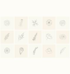 set of floral design elements plants branches vector image