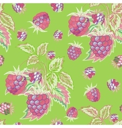 Seamless pattern with pink raspberries on green vector image