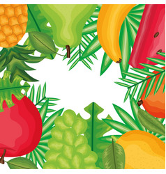 fresh and tropicals fruits frame vector image