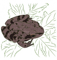 Meadow frog vector
