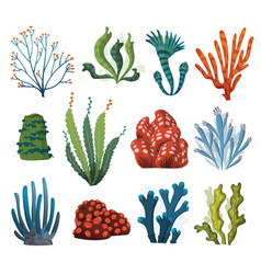 Set watercolor seaweed and corals isolated on vector